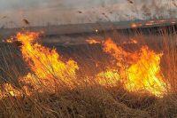 Природный пожар в СНТ «Буровик» под Оренбургом локализован.