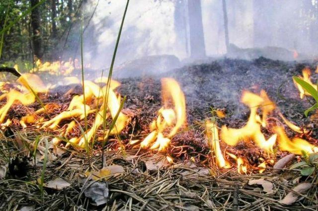 В СНТ «Буровик» в Оренбурге рано утром загорелась сухая трава.