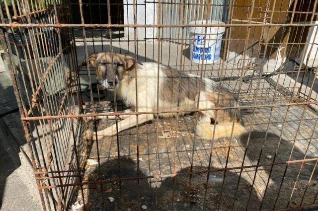 Подпольный приют: под Киевом женщина содержала в квартире 69 животных