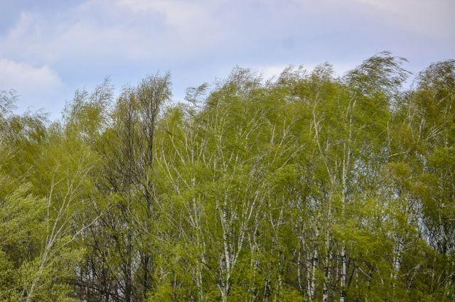 В Оренбургской области в ближайшие сутки ожидается ветреная погода.