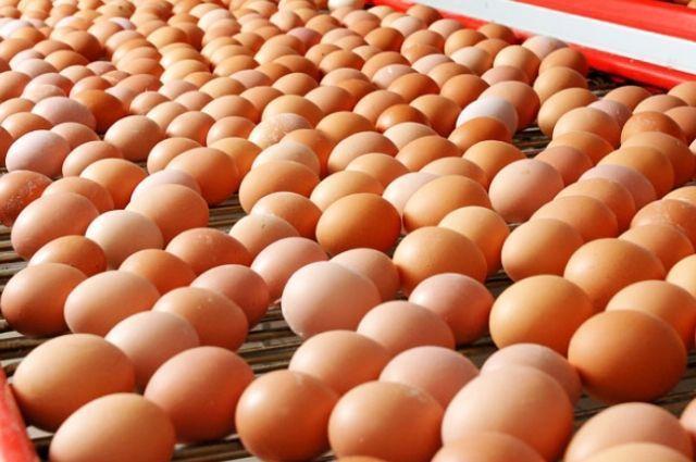 Оренбургской областной клинической психиатрической больницей № 1 подана жалоба в УФАС на поставщика куриных яиц.