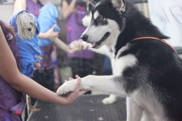 Контакт между собакой и человеком – первый шаг к социализации.