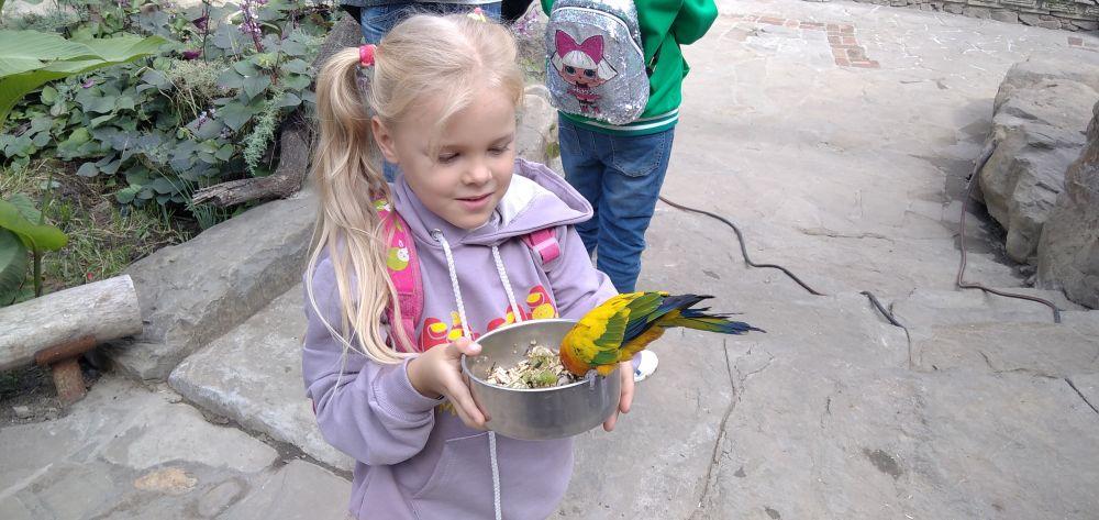 Попугайчики едят прямо из рук.