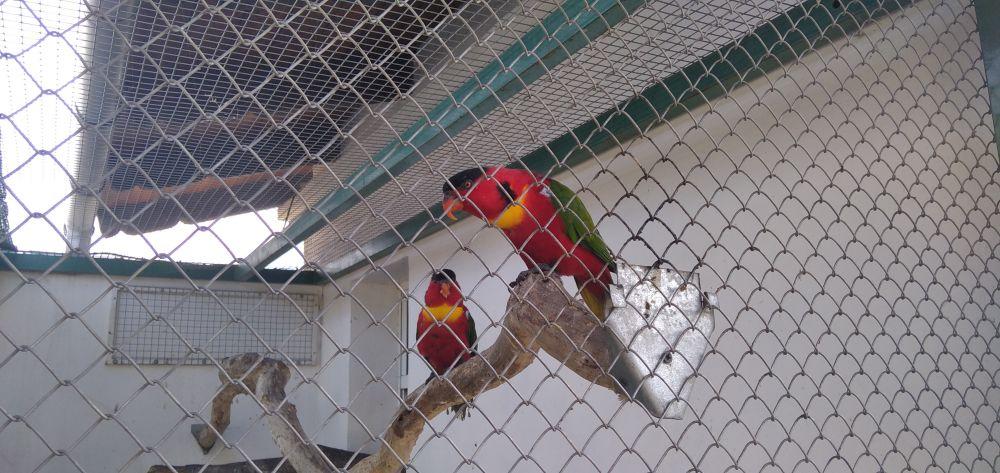 Пестрые попугаи, которых здесь множество, радуют глаз.