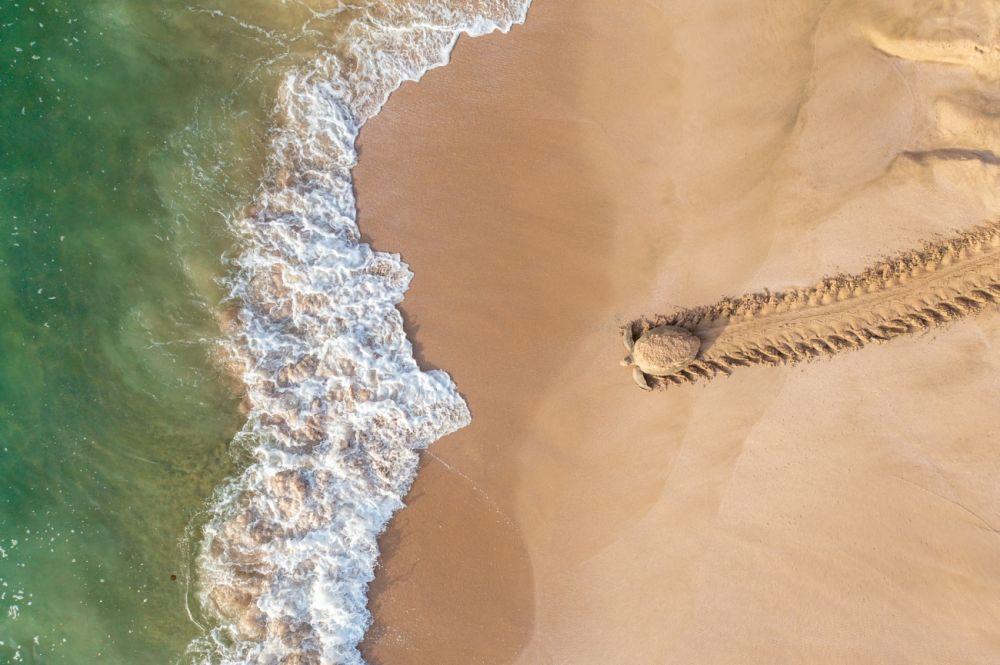 В категории «Дикая природа» победил Касим аль Фарси (Qasim Al Farsi) с фотографией «Назад, к приключениям». Зелёная черепаха возвращается в воду после того, как отложила яйца в гнезде на побережье Омана