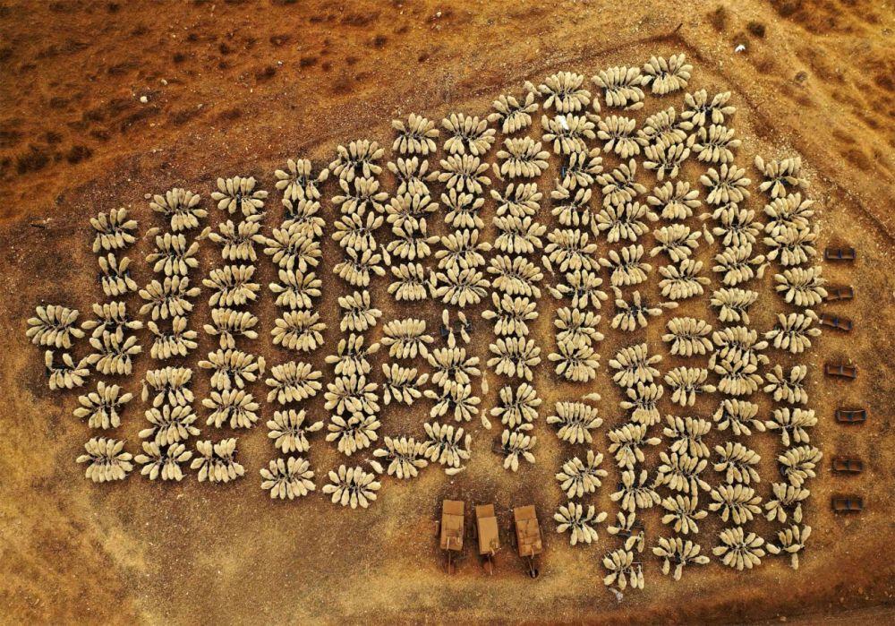 Автор фотографии «Овцы в Конгрессе» Джоэл Роберт Азиаго (Yoel Robert Assiag) удостоен высокой оценки жюри в номинации «Дикая природа». Фотограф рассказал, что он следил летом и зимой за стадом более чем из 1500 овец