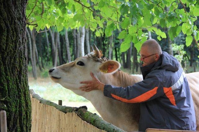 «Магазин на диване»: Экосистема Своё Фермерство  от Россельхозбанка упрощает процесс выбора и  приобретения сельхозживотных.