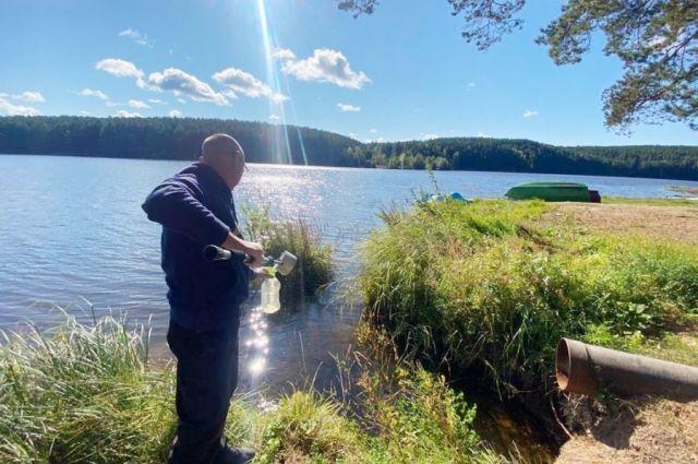 Проблема загрязнения озера в Реже была решена во время прямой линии.