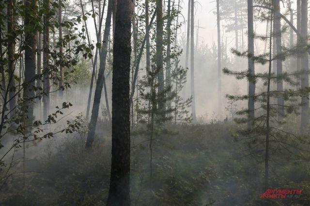 В России за сутки потушили 17 лесных пожаров