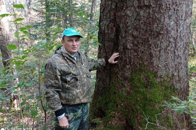 В развитие лесной отрасли Архангельской области вложат более 140 млрд