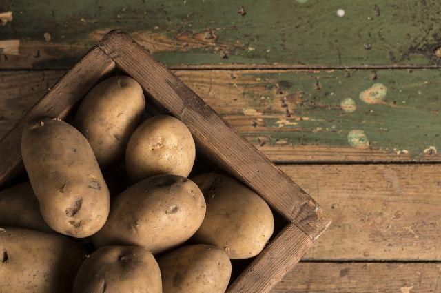 В Оренбургской области завершается уборка картофеля.