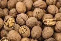 Полезные и вредные свойства грецкого ореха.