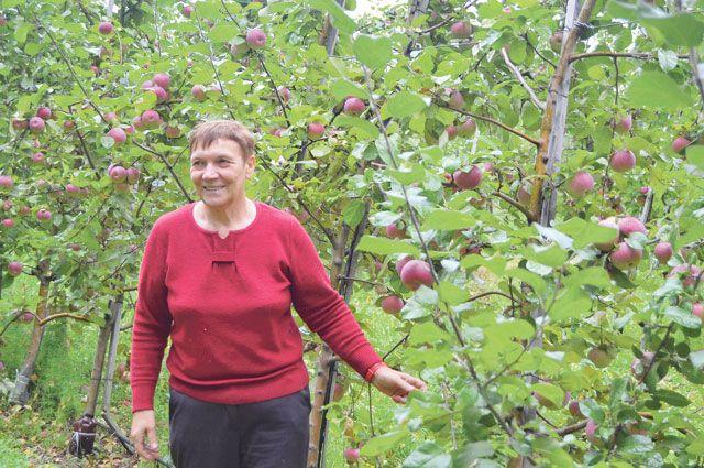 Свежие, румяные, наливные, полезные – именно такие яблоки выращивают жердевские садоводы.