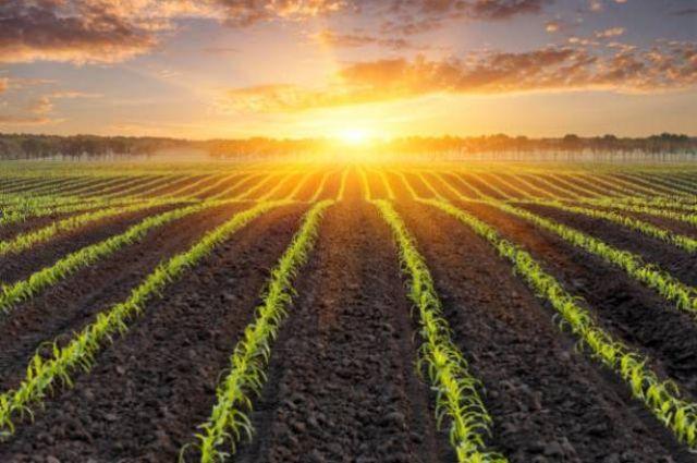 В Украине заключили более 19 тысяч земельных сделок