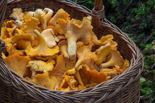 В посылках - грибы и ягоды