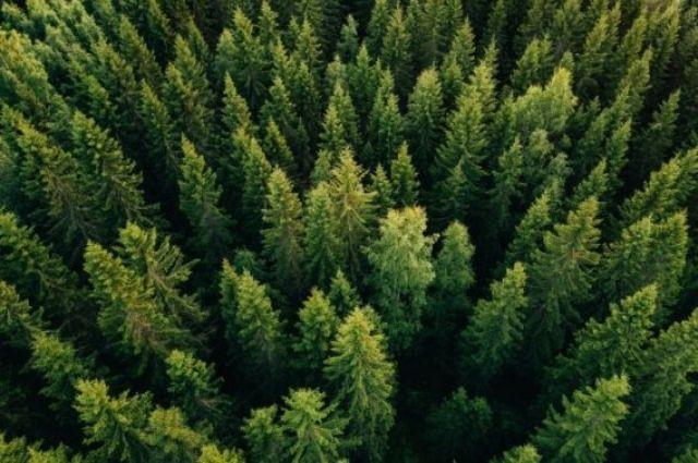 «Зеленая страна». Как в Украине планируют высадить 1 миллиард деревьев.