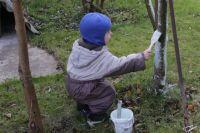 Сентябрь – время для заботы о плодовых деревьях.
