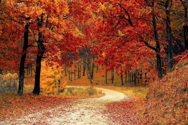 Краски золотой осени.
