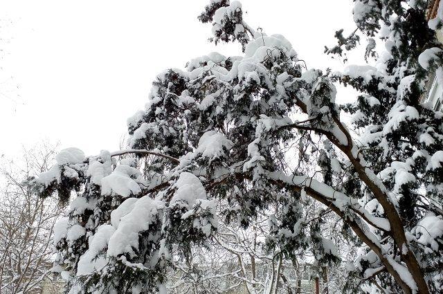 Жителям края нужно готовиться к суровой зиме.
