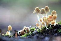 В Германии 95% диких грибов до сих пор заражены радиацией из Чернобыля.