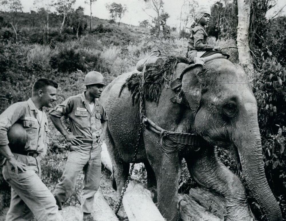 Боевые слоны. Основу ударной силы армии легендарного карфагенского военачальника Ганнибала составляли боевые слоны. По эффективности действия их можно сравнить с танками в двадцатом веке – ни один противник не мог справиться с этой тяжелой боевой единицей. В XX веке слонов использовали в качестве тягловой силы на складах боеприпасов