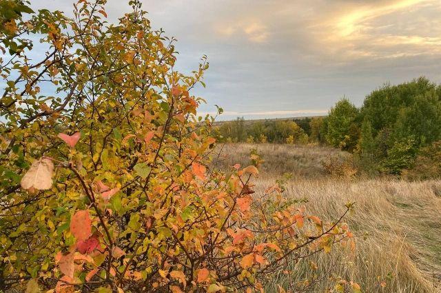 «Золотую осень» в Оренбуржье задержит антициклон.