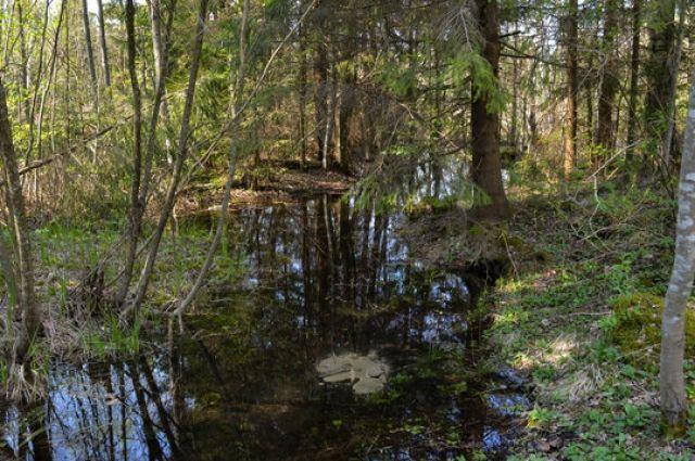 По факту обнаружения в лесополосе в районе п. Шахтерск тела 58-летнего местного жителя организовано проведение доследственной проверки.