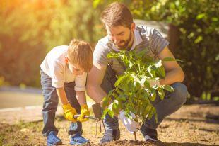 Где посадить дерево в честь своего ребёнка?
