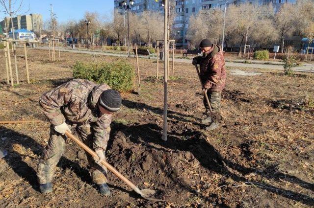 В Оренбурге ведется плановая замена неприжившихся зелёных насаждений.